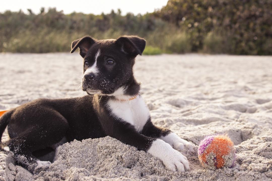puppy beach